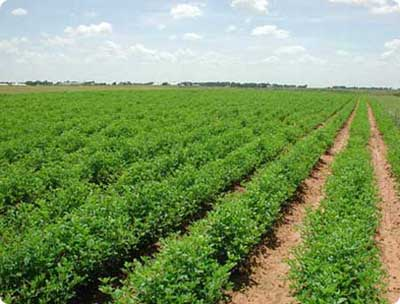 agricultural-in-pakistan-picture