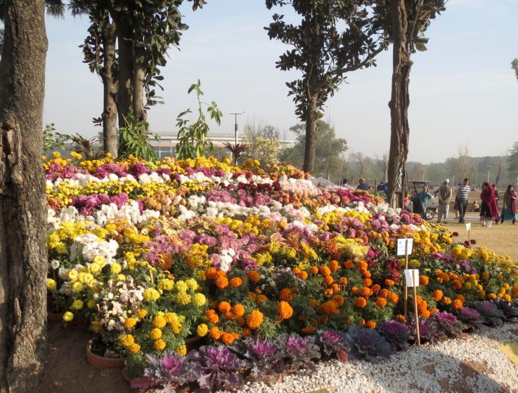 Autumn Flowers Show Bloom In Islamabad