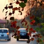 Fall in islamabad
