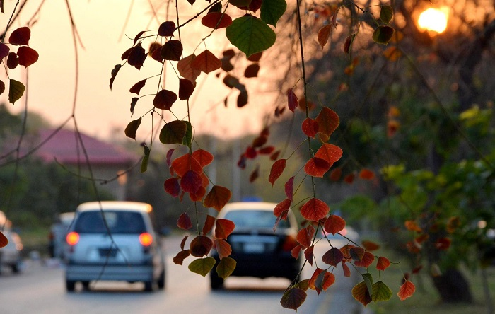 Beautiful fall colours in Islamabad. Photo by Shabeer H. Masoom