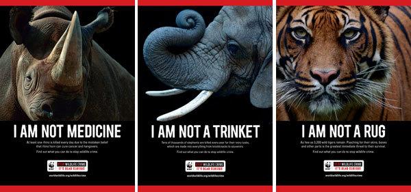 Illegal wildlife trade in Pakistan