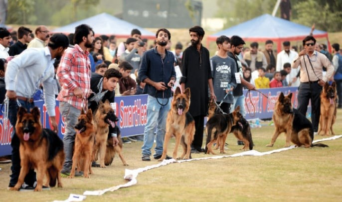 People parade their German Shepherds during the dog show on Sunday. — White Star